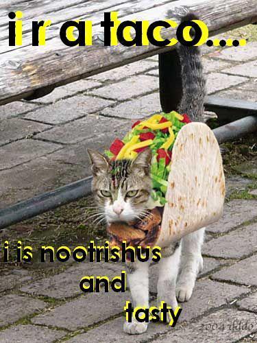 NO anda mencuri MY taco and I mencuri it back fair and square! i bet anda dont want my taco now!