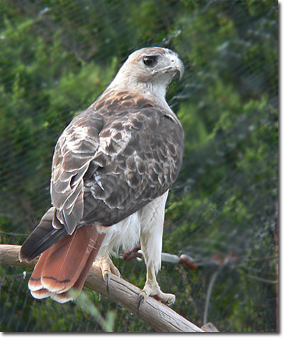 Hawk ^_^