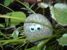Ты can burry him with mine, her name is Geeorgeea... pet rocks have a really short life spoan. :(