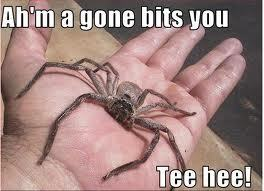 i bet u put it there!!!!!!well your not geting it back!hahahahaha!ow it bit me*throws it at you*i hate you!