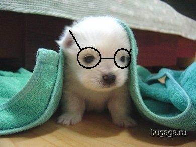 I'm a puppy with glasses.