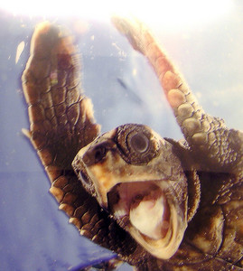 Turtles are better than awesome. They are epic.