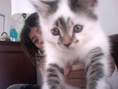 this is my kitten: