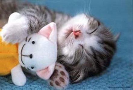here's a cute kitty :)