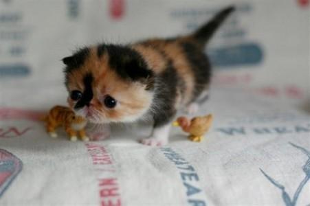 OMG! She's soooooooo frickin cute!