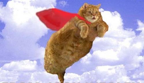 hehe flying cat!
