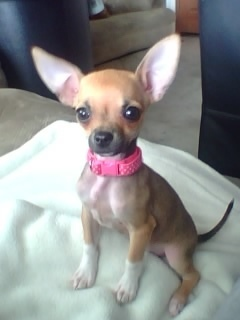 Anjing are my favourite ... But anda all know that already :D chihuahua is my bahagian, atas fave though :)