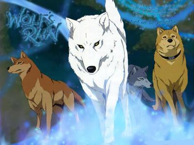 i think it would have to be Wolfs Rain i absolutely luvveed the series and if not that then probably Tokyo Mew Mew