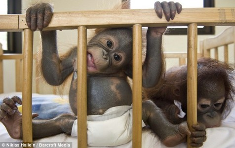 Here, monkey.