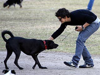 Orlando Bloom's dog Sidi!
