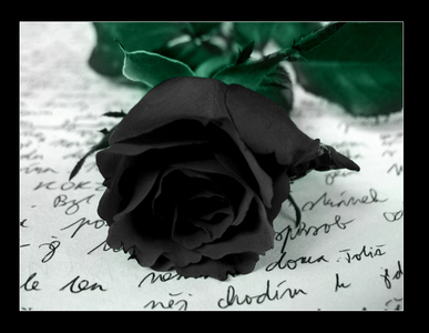 I don't know why, I just like black roses.