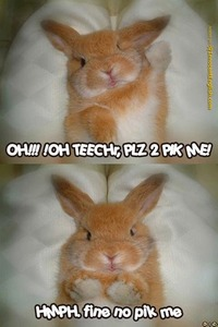 The grammar on this kills me, but isn't the bunny just adorable? :)