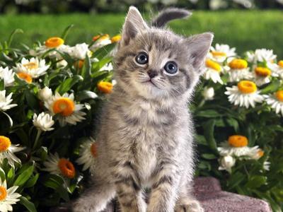 I Cinta cats,they r so cute.