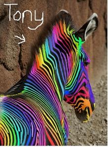 A arco iris cebra ..... named tony