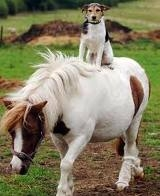 Would u like a talking dog, a talking টাট্টু অথবা both? xD Here u go.