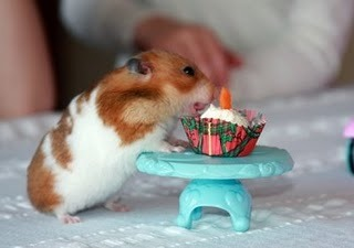A hamster with a cupcake, kek cawan :3
