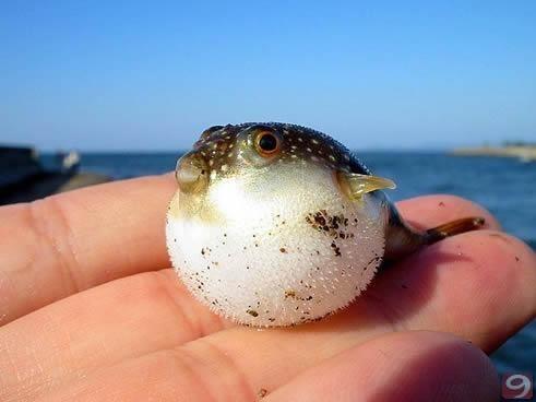 fishie :)