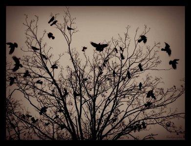 I like crows and ravens. They have such a wonderful macabre sort of beauty about them. I like black, I've always wondered what flying would be like, and crows are very Rebelle birds, completely without fear of human beings.