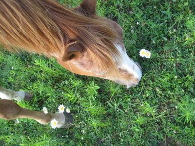my horse, Patrick ^^
