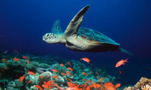 Turtles :D