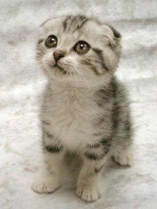 A iccul baby kitten...