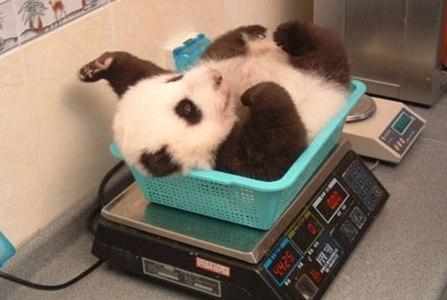 Pandas of course!