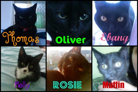 Yeah :) I have 6 cats: Thomas Oliver Ebany Molly Rosie bánh nướng xốp, muffin