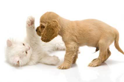chiots and kitties.