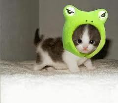 Heres a kitty with a froggie hat