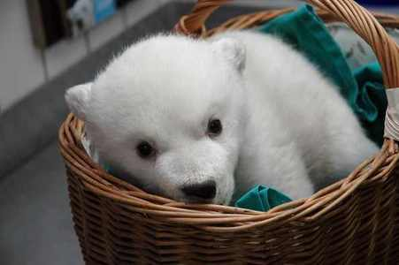its a baby polar ours :D