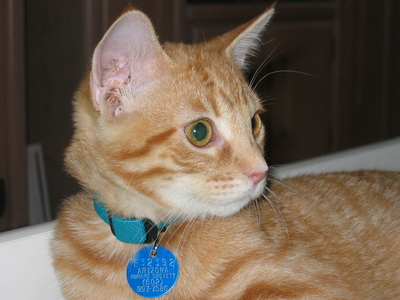 My kitty, Teddy. He's 4 months old in this pic. He's almost 3 now.