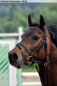 This is my horse, Piotrus Pan ~ <3 Sure we can be Những người bạn too! :3
