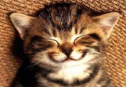 smiling kitten?