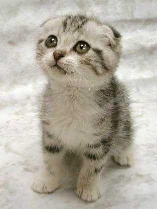 super cute!!! XD