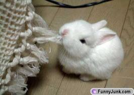 BUNNIES ARE VERY CUTE!!!!!