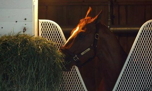 my yêu thích racehorse is my horse is Flying ngôi sao i own her. Do u like her???