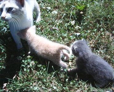 Kittens. :D