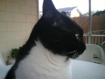 My cat Mia: