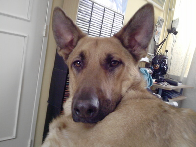 My dog :) Wodan :D
