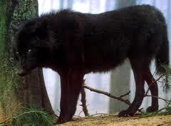 i dont no maybe its because people r scared of them we have a tendancy to kill what we r afraid of