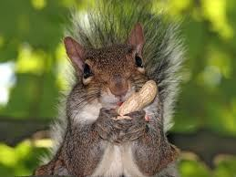 I like squirrls !!!!!!!!!!! (the cute animals) ♥♥
