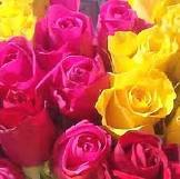 Roses! They're so precious! :)