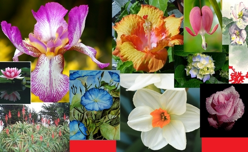 Iris, Hibiscus, Blossoms (any kind) Jonquil (March's flower, so my flower) Hydrangeas, Torch Aloe, Morning Glorys, mga rosas (any color) Water Lillies, Calla Lilies, lila (all kinds) Bleeding puso Flower. these r just the ones i know the names of that i love.