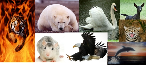 Polar Bear = 3  Eagle = 3 Cat = 3  Hamster = 2 Deer = 2  Dolphin = 1  Tiger = 3 Swan = 1 totals~3, 3, 3, 2, 2, 1, 3, 1 =18 You are active, like challenges, optimistic, hard-working, and are always working towards a set goal.