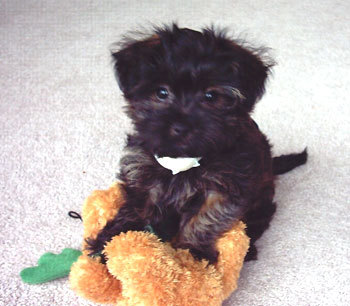 """This picture makes me go """"aw!"""" XD It definitly looks like my dog Cha-Cha ^_^"""
