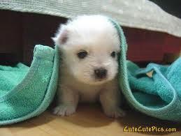 isn't he cute?