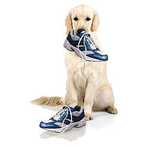 if a dog chews shoes,whose shoes does he choose?