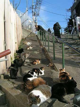 How about the homeless Katzen of Japan. <3