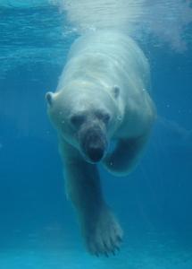All polar bears are left handed