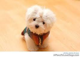 ♥ it's even wearing a little sweater....